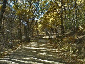 Camino Castañar del Tiemblo