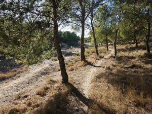 Lobostrong - Pinares