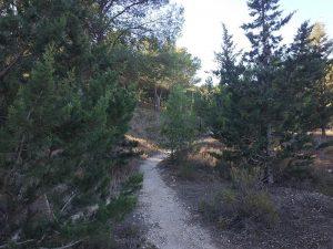 Lobostrong - Subida de los Pinos