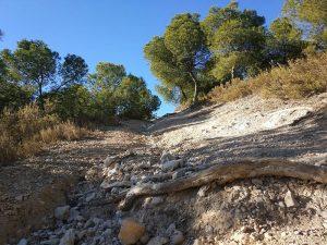 Lobostrong - Terreno suelto con raíces