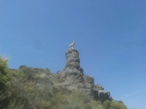 Mirador cabra Montés