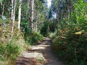 Camino Bosque de Veigue