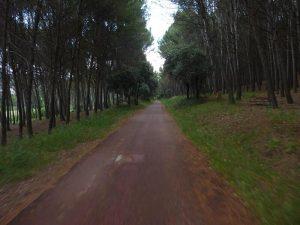 A la sombra de los árboles