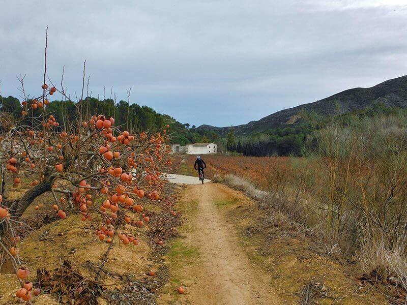 Senda y Naranjos - Ruta en bici por Xátiva