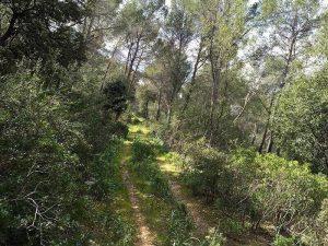 Pista antes de llegar al camino de Sa Teulera (Camino Viejo de Alaró)