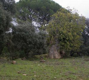 Ruinas de la casa del coronel