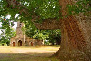 Ermita y castaños milenarios - La Alcobilla