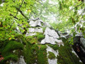 Rocas de piedra caliza en el Hayedo