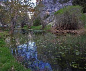 Nenúfares en el río Lobos