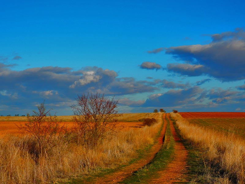Camino por Torozos