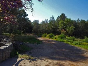 ruta tarragona ermita sta maria alba
