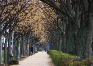 Ruta Vía Verde Ciudad Real Poblete