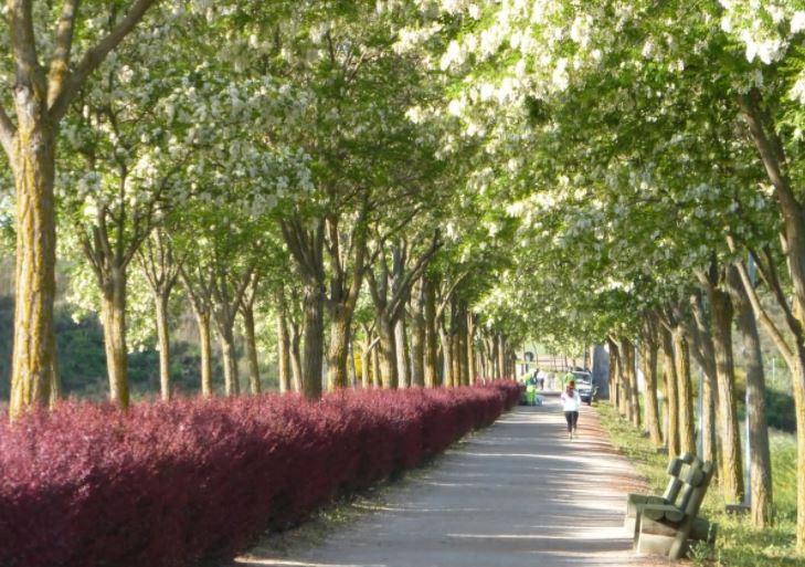 Jardines Vía Verde Ciudad Real Poblete