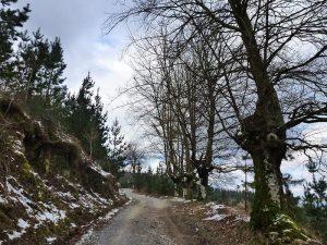 Camino de Arnoate Invierno