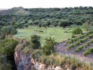Barranco después de Ribafrecha