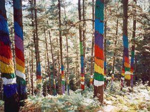 Bosque Pintado cerca de Oma