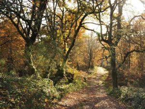 Bosque robles y castaños