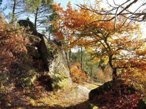 Bosque y Rocas