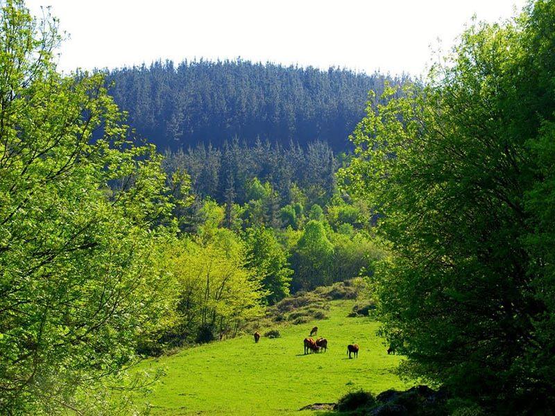 Caballos en el Valle de Oma