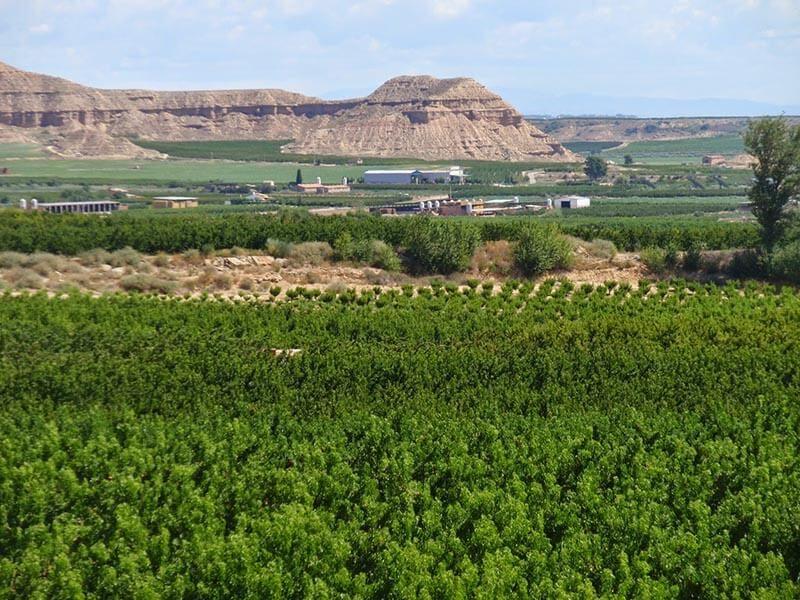 Campos de frutales en el Valle del Cinca cerca de Fraga