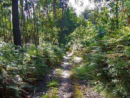 Maleza Bosque de Veigue