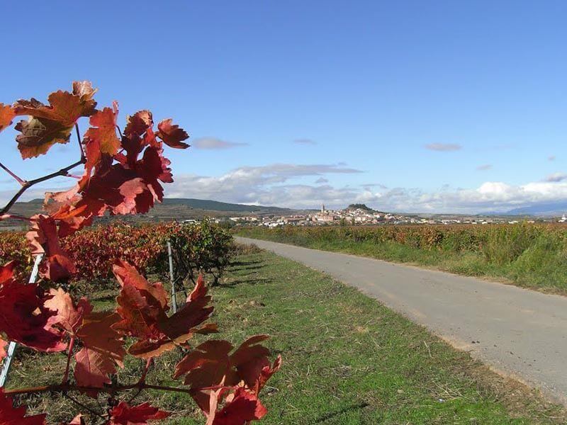 Navarrete - Camino La Mora