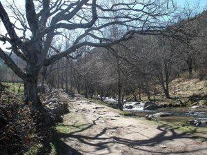 Camino junto al río