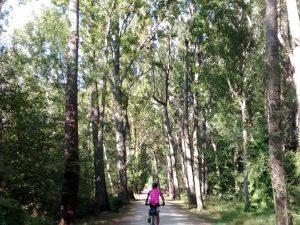 Entrando al Bosque Finlandés