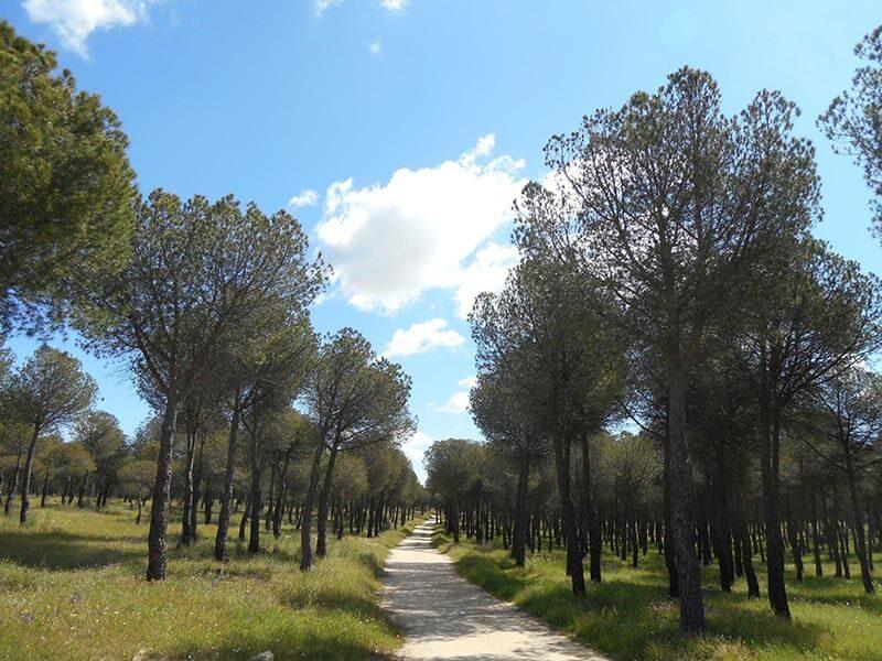 Paso por Pinares
