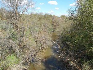 Río Guadarrama desde Puente de Hierro