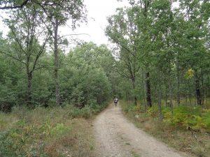 Vereda del Camino de Madrid