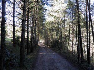 Via Verda del Llobregat en bici