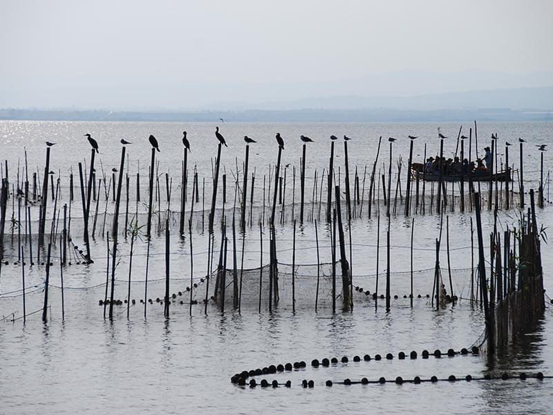 Redes de pesca Gola del Pujol