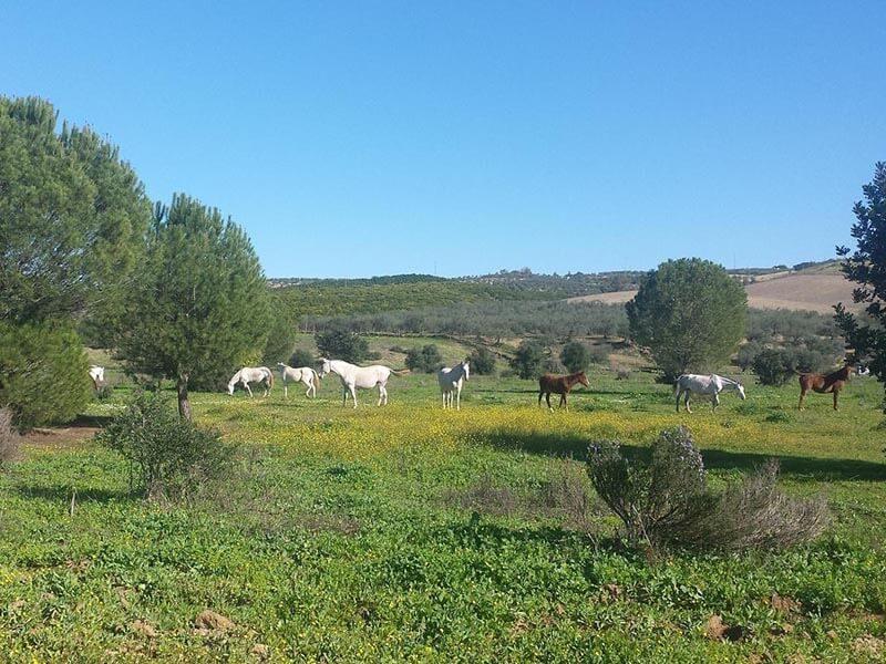 Caballos en el Corredor verde Guadiamar