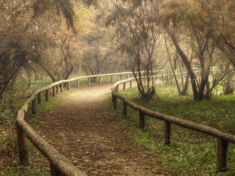 Corredor Verde del Guadiamar en Otoño