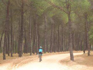 En bici entre los Pinares de Aznalcázar