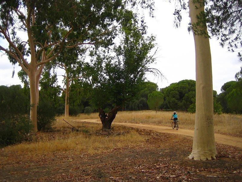 Ruta en bici por los Pinares de Aznalcázar