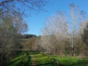 Sendero con hierba por el Corredor Verde del Guadiamar