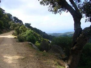 Ruta BTT Tarifa - Guadalmesi