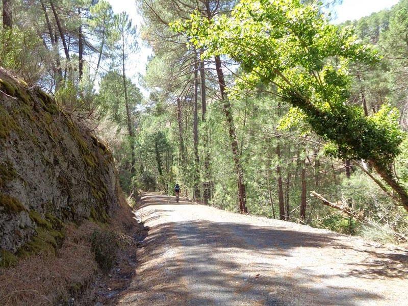 Senda del Genaro -  Pista Forestal a la Presa de La Parra