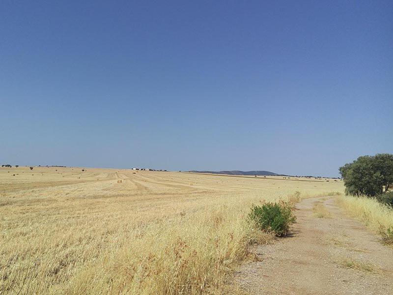 TransAndalus Campo de trigo
