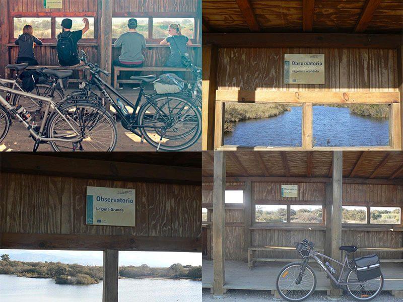 Observatorios de aves en la Desembocadura del río Guadalhorce