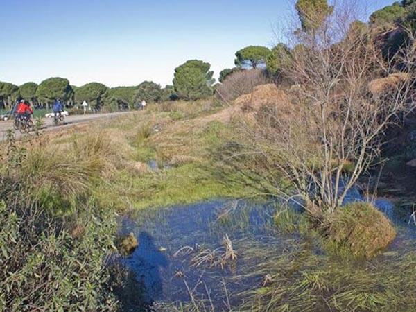 Charca junto a la carretera de Villaviciosa